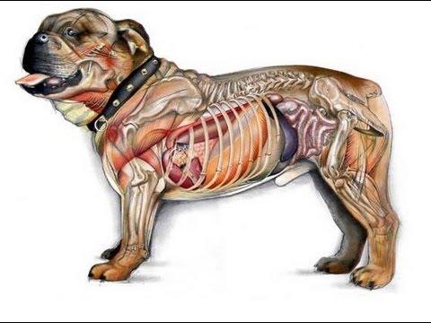 Anatomía Animal - Clase 01 Introducción - YouTube