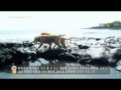 What is Channel Happy Dog? 채널 해피독은 어떤 방송일까?