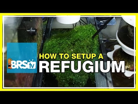 Week 27: Refugiums - Utilizing algae for a thriving reef tan