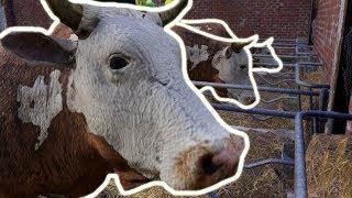 Kupiłem zwierzęta do gospodarstwa - Farmer's Dynasty (#8)