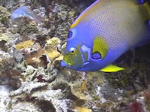 Angel And Butterfly Fish By Michael Fairchild.mov
