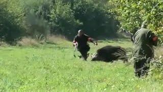 Приколы неудачи и необычные случаи на охоте Встреча с дикими животными