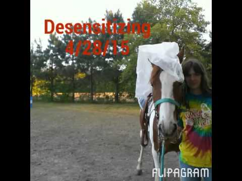 Paint Horses For Sale | Black And White Paint Horses For Sale from YouTube · Duration:  3 minutes 1 seconds  · 5.000+ views · uploaded on 15.09.2015 · uploaded by Pets Vacations
