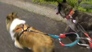 チャンネル登録お願いします 甲斐犬ですが、10年前に我が家に来ました。...