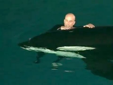 Caught On Tape: Whale Nearly Drowns SeaWorld Trainer