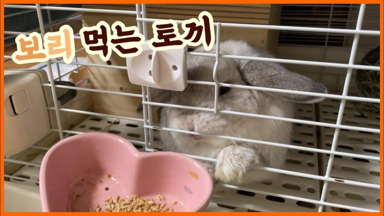 보리를 처음 본 롭이어 토끼의 반응