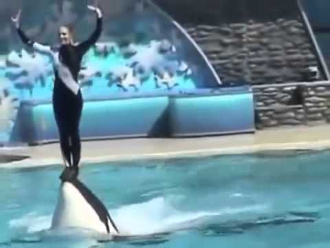 Animal World Dolphin circus performances too great