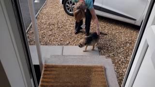 Border terrier Leeloo welcomes mum home.