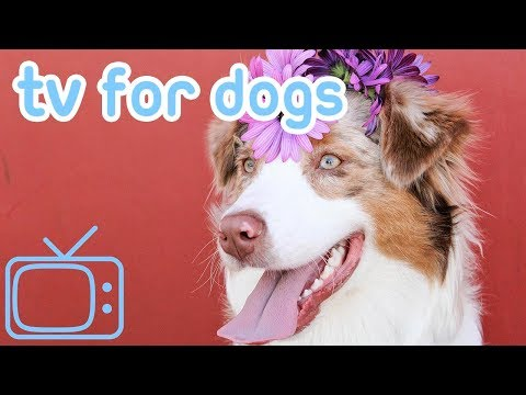 Videos For Dogs! Relaxing TV And Music For Dogs!