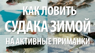 РЫБА СУДАК ЗИМОЙ на БАЛАНСИРЫ и другие АКТИВНЫЕ ПРИМАНКИ со ЛЬДА(Рыба судак зимой на балансиры, бокоплавы, блесна на Воткинском водохранилище в Приволжье. Как ловить судака..., 2017-02-12T07:00:01.000Z)