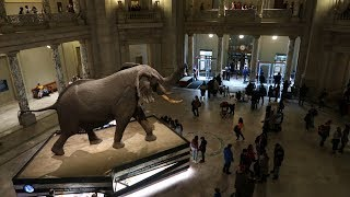 Visiting The Smithsonian And Natural History Museum In Washington D.C.!