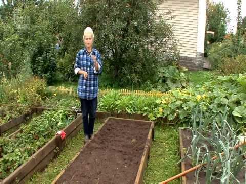 видео: 5_Посев моркови в открытый грунт.  ВСЕ О ВЫРАЩИВАНИИ МОРКОВИ.