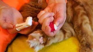 Чистка зубов коту