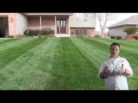 Organic Lawn Care Tips & Advice