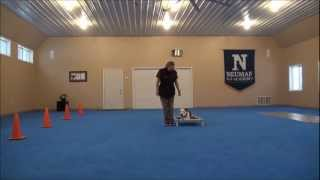 Gucci (pitbull Terrier) Dog Training Camp Video