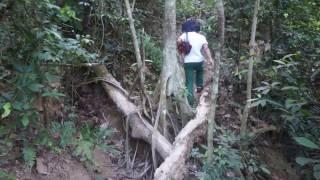 Hutan Simpan Kota Damansara, Selangor | Beginner Jungle Trekki…