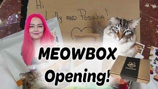 March Meowbox | Cat Subscription Box Opening thumbnail