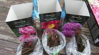 Наша дача на 2 мая 2018 г. Сажаю цветы, пикирую томаты и сею капусту.