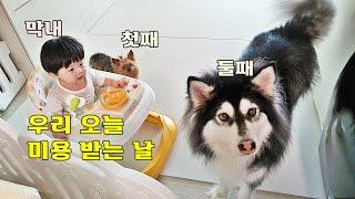 (SUB)오늘 우리 집 강아지 삼남매 털 관리하는 날 …