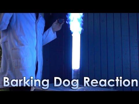 Barking Dog Reaction in Slow-Motion!