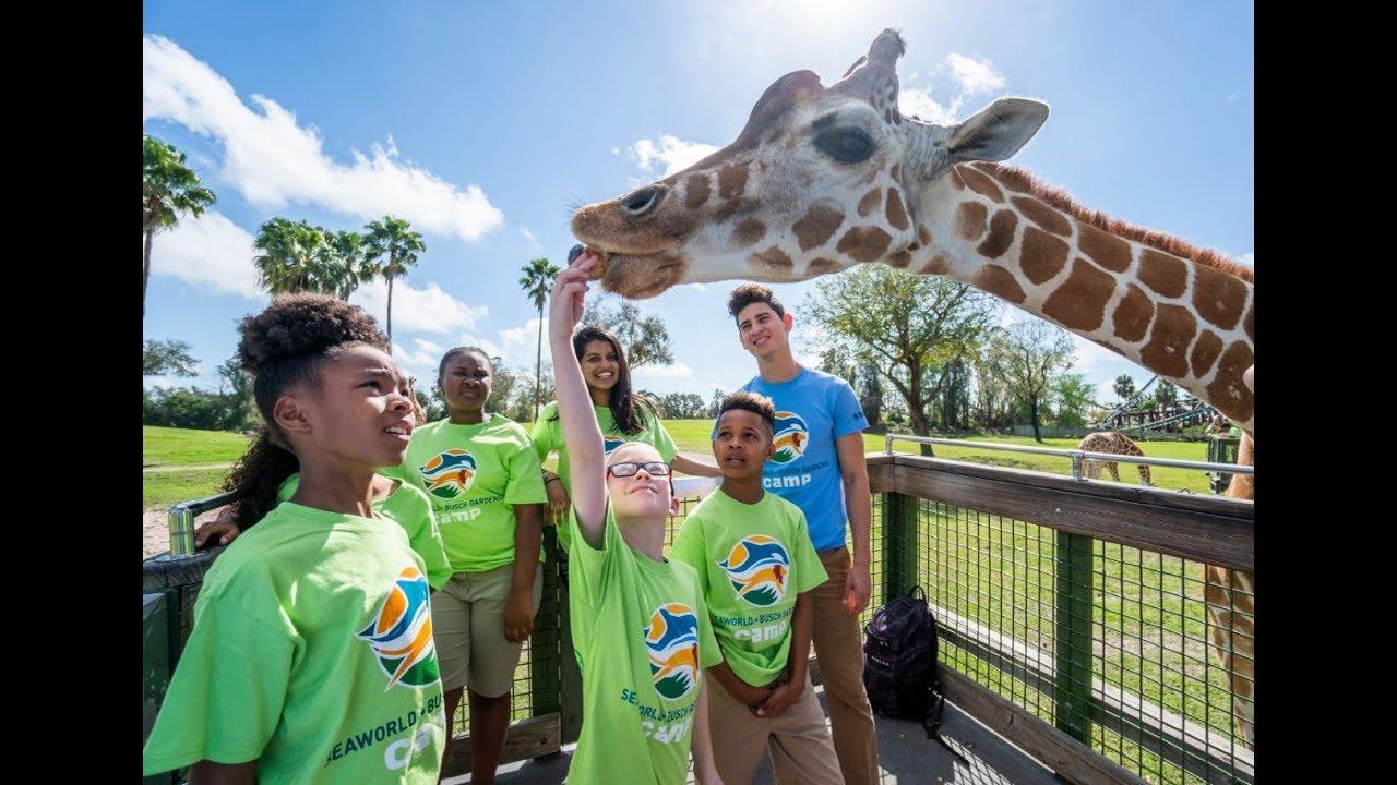 Summer Camps Busch Gardens Tampa Bay Youtube