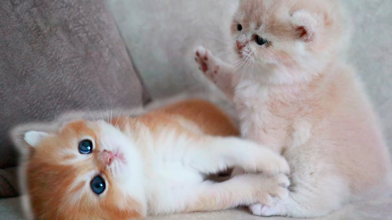 🥰 27 days after birth   Funny tiny kittens   16 minutes for your good mood 😀👍