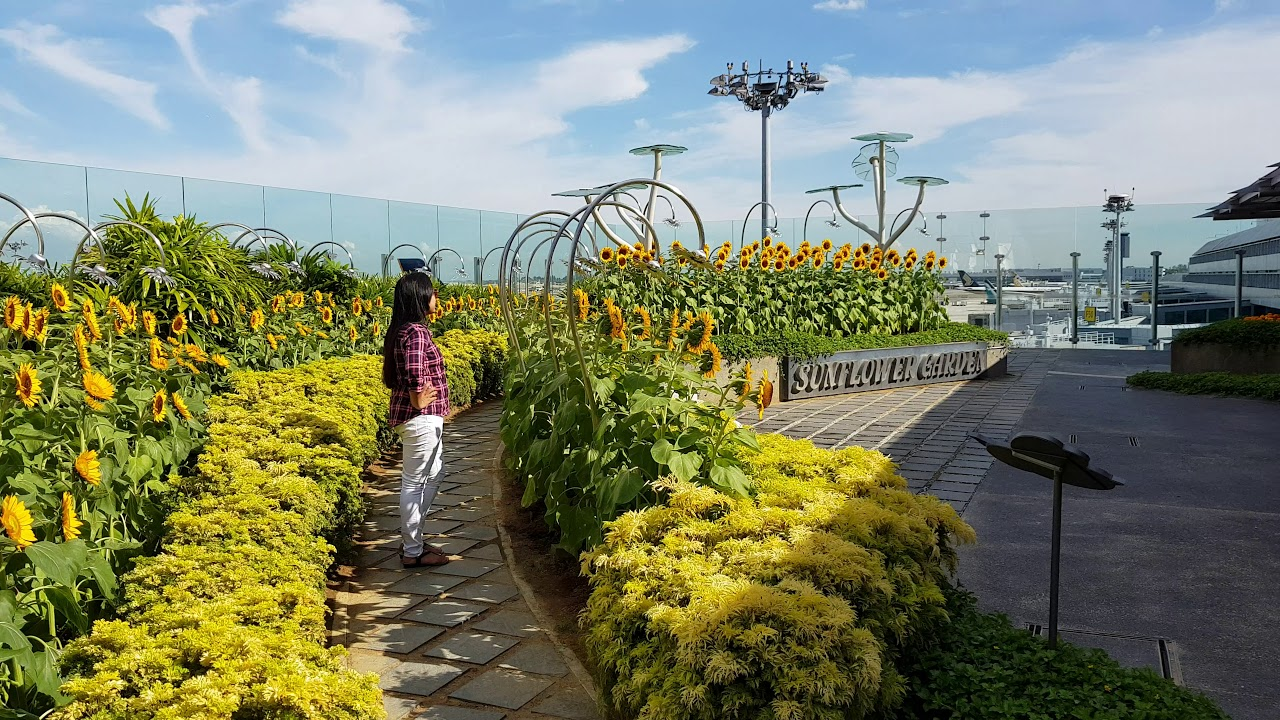 changi airport, sunflower garden t2