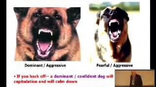 The Basics Of Dog Body Language