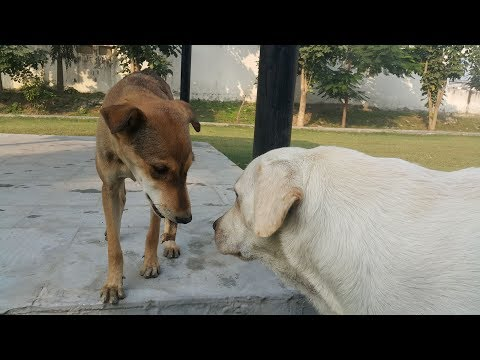 Labrador Shares Food With Street Dog | Dogs Playing In Park | Feed The Speechless Animals |