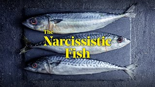 A Scottish Opera Short: The Narcissistic Fish