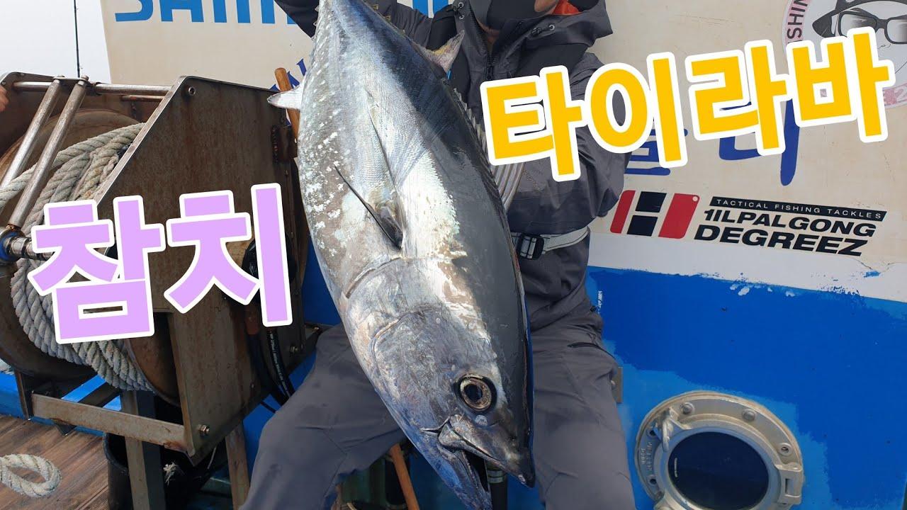 진짜 이건 못 참치 타이라바 참치 랜딩 한국에서도 참치낚시 가능?