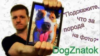 DogZnatok - Определение породы по фото