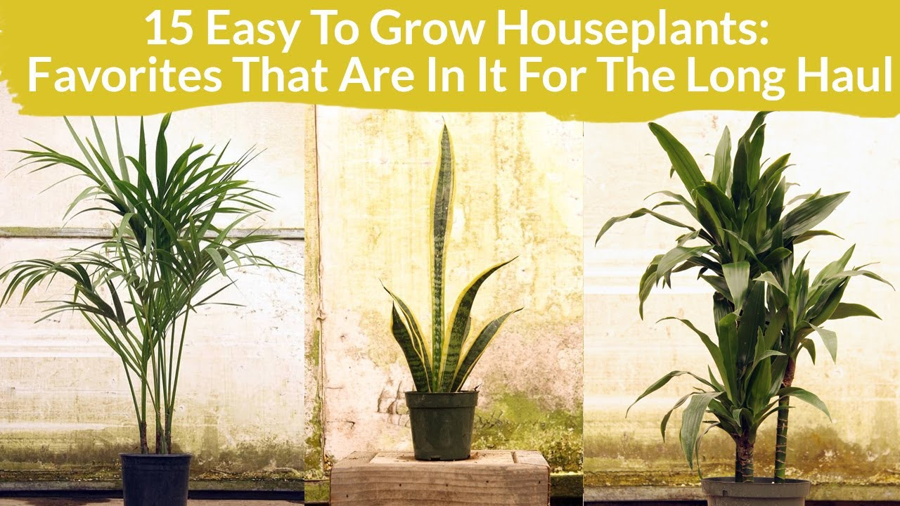 15 Easy Care Houseplants Favorites In It For The Long Haul Joy Us Garden Youtube