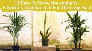 15 Easy Care Houseplants: Favorites In It For The Long Haul / Joy Us Garden