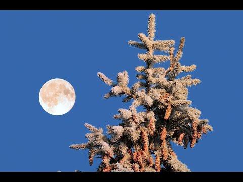 Unser Wald Im Winter