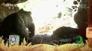 《秘境之眼》 棕熊 20201214| CCTV - YouTube