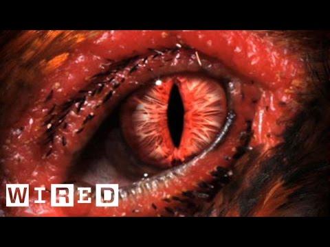 Chickensaurus Paleontologist Jack Horner - Wired Interviews