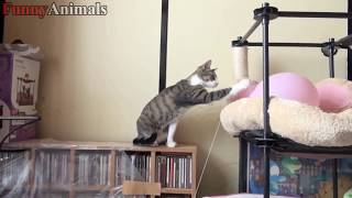 CATS vs BALLOONS   Funny Cats Popping Balloons Compilation 2018