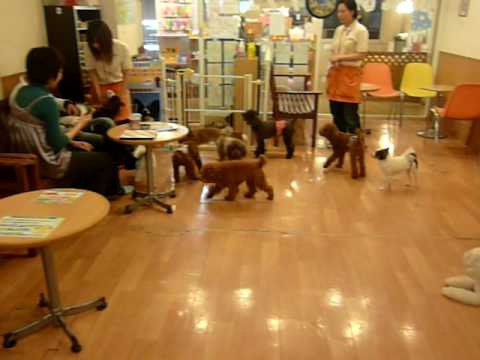 Cat Cafe In Tokyo Youtube