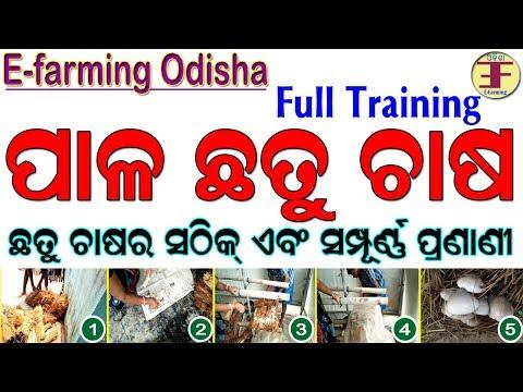 mushroom-farming-in-odisha(mushroom-cultivation-in-odia)-।-ଛତୁ-ଚାଷ-।-ପାଳ-ଛତୁ-ଚାଷ-।