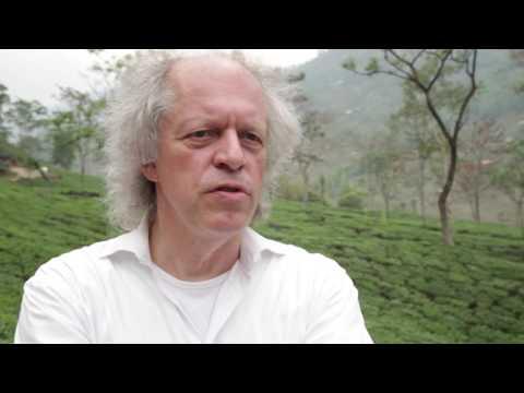 HolzBlog - Teeanbau in Darjeeling
