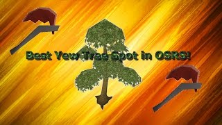 OSRS Best Yew Tree Spot! A Prozey Woodcutting Guide!