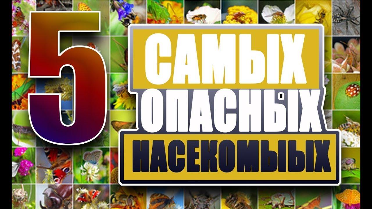 Опасные насекомые России