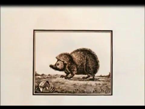 Мультфильм чарльз дарвин происхождение видов