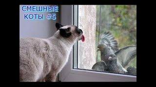 Приколы с Котами Смешные коты и кошки 2019 #5
