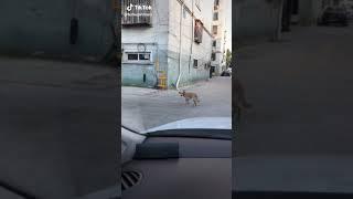Crazy moment | FUNNY DOG 😂