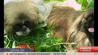 Ветеринары предупреждают – перегрев животных может привести к их гибели