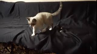 Игривый котенок в дар