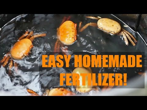 How To Make Homemade Fish Fertilizer (A Cheap Garden Hack)