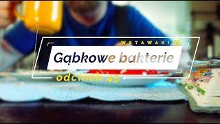 Wstawaki [45] Gąbkowe bakterie